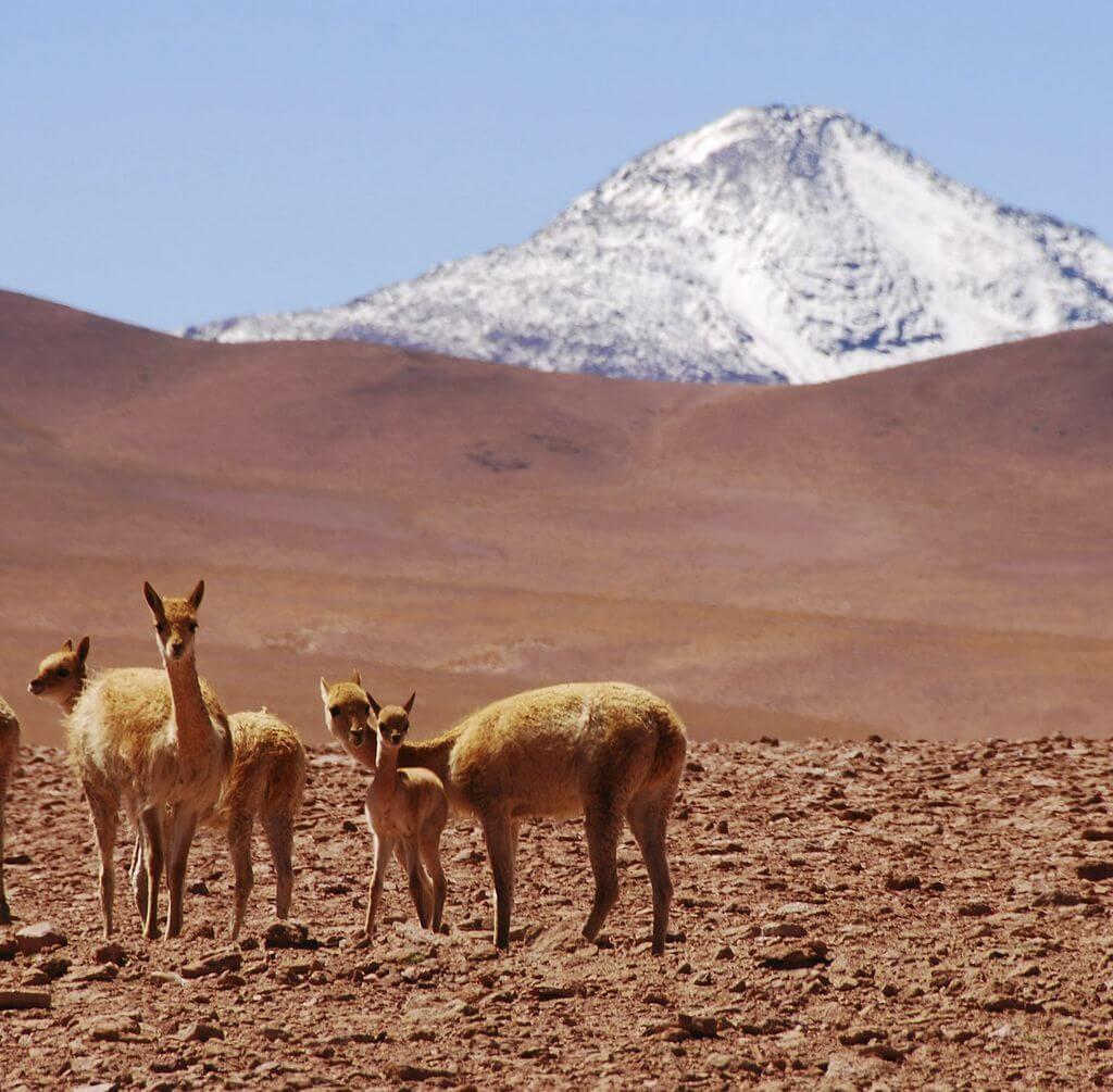 o-que-fazer-no-deserto-do-Atacama